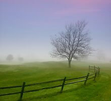 Single tree caught in the winter fog by snehit