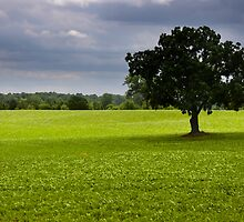 Single tree in the middle of fields by snehit