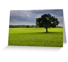 Single tree in the middle of fields Greeting Card