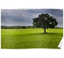 Single tree in the middle of fields Poster