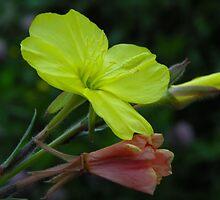 El encanto de una flor silvestre.... by cieloverde