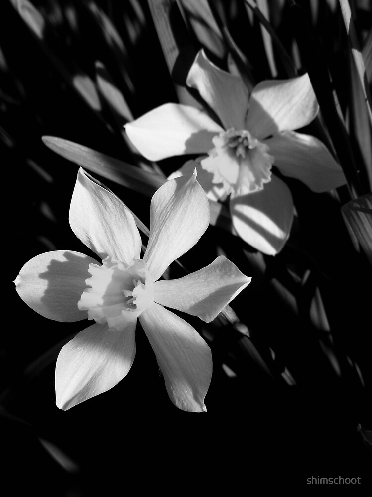 Basking in Spring's Light by shimschoot
