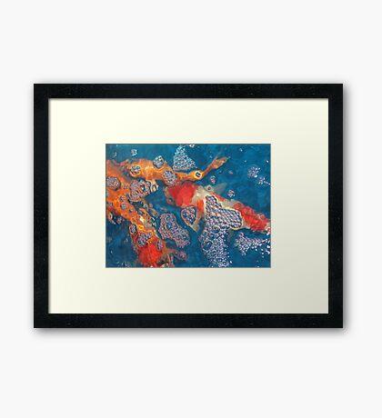 Koi10 Framed Print
