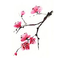Flowering cherry. Photographic Print