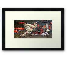Koi at Houston Zoo Framed Print