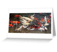 Koi at Houston Zoo Greeting Card