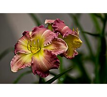 "Daylily ""Wisteria"" Photographic Print"