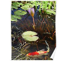 Koi and Waterlily Poster