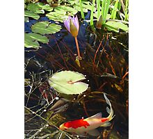 Koi and Waterlily Photographic Print