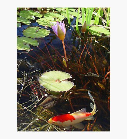Koi and Waterlily Photographic Print
