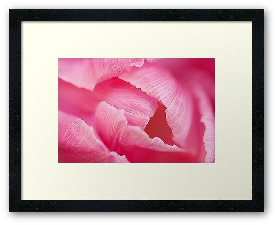 Pretty Petals by Marilyn Cornwell