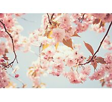 Cherry dream Photographic Print