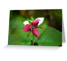 Red Trillium Wildflower Greeting Card