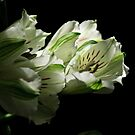 Alstroemeria - Cut Flowers by Michael Cummings