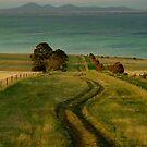 Spray Farm Lane,Bellarine Peninsula by Joe Mortelliti