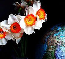 narcissi on top of the world. by Alexandra Brovco