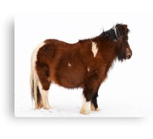 Pony in the Snow Canvas Print