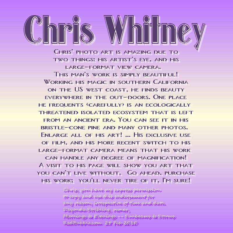 CHRIS WHITNEY by Dayonda