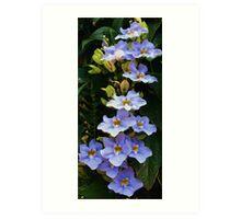 """Blue/Purple Orchids """"PurpOrch"""" Art Print"""
