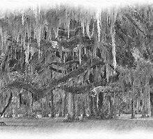 pencil drawing of moss covered live oak trees by A.R. Williams