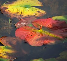Lily Pad on the Water by vigor