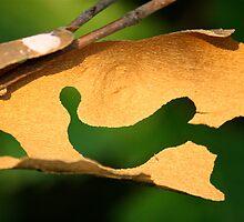 Hanging Bark by Lynn Wiles