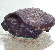 Baby Snapper by Tmac02892