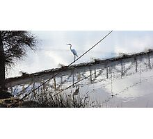 Bird on the Wire - Egret at Erskine River Photographic Print