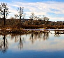 Trees on Tranquil Lake by Christina Rollo