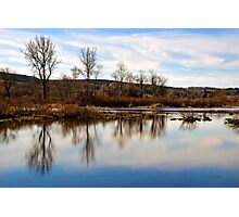 Trees on Tranquil Lake Photographic Print
