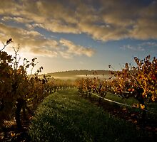 Barossa Dawn by Rob Beckett