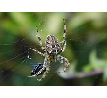 Spider with its Dinner Photographic Print