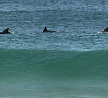 Dolphins by Cheryl Parkes