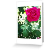 CURIOUS PINK Greeting Card