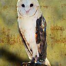 Barn Owl by Barbara Manis