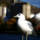A Gull in Red Wing by shutterbug2010