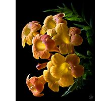 Orange Jubilee Photographic Print