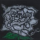 WHITE ROSE by NEIL STUART COFFEY