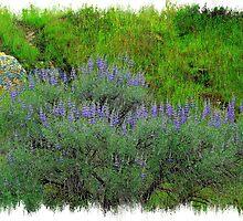Valley Spring Colorzzzzz by davesdigis