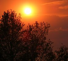 Forest Fire Sunset by Barrie Daniels