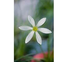 Rain Lilly - Jacques coffee plantation Mareeba  Photographic Print