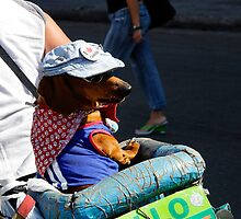Cool looking Dog with sunhat & glasses by buttonpresser