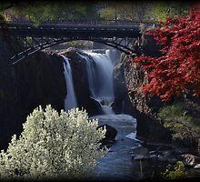 Great Falls Spring Foliage by Tim Holmes