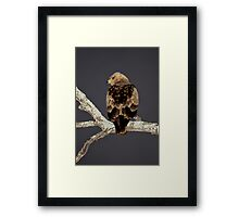 Night Time Approaches Framed Print