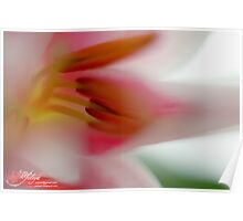 Dreaming about Spring Poster