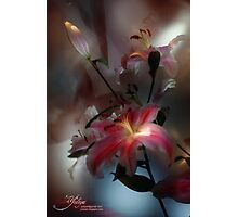 Lily, Flashlight and Bulb Photographic Print