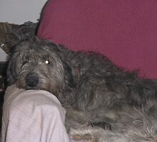 Idun The Deerhound by Tracy Manning