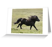 Shetland Stallion Greeting Card