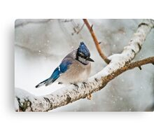 Blue Jay In Spring Canvas Print