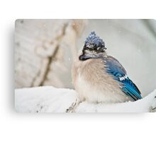 Blue Jay In Spring 2 Canvas Print